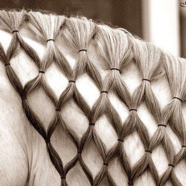 30 Horse Tail Braids Ideas 6