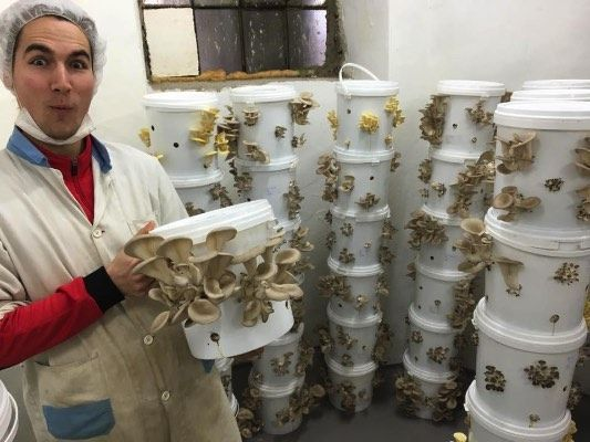 Urban Mushroom Farming - 4 Great (yet small) Enterprises                                                                                                                                                                                 More