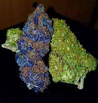 Buy Weed Online Fast Discrete Delivery 24/7, Order Weed Online .TEXT OR CALL +1 (720) 577-4760 Email;themedicinalcannabisdispensary@gmail.com https://www.themedicinalcannabisdispensary.com/