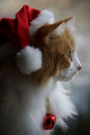 Кот в новогодней шапке