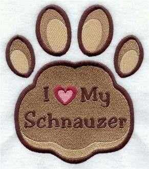 "My mini schnauzer - His name is ""Murphy Brown"" ♥"