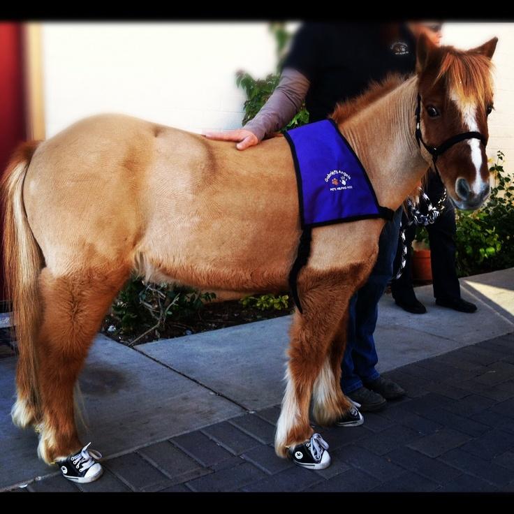 A miniature horse in converse sneakers. - Imgur | Cute ...