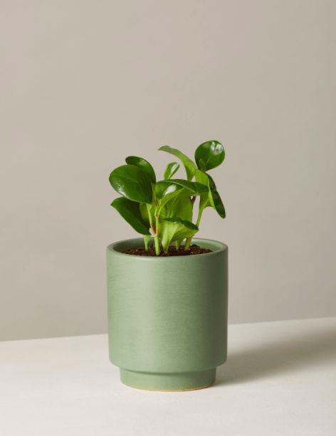 the most popular indoor plants of 2019 according to experts rh pinterest com