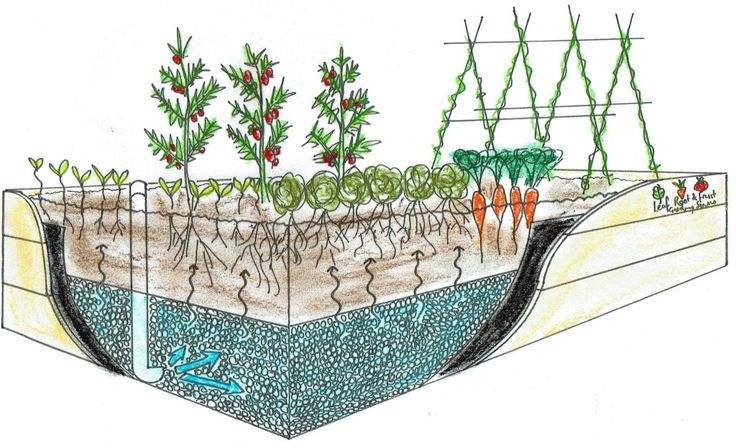 Wicking beds use capillary action to water the plants from a water-tight reservoir in the base of the garden bed.