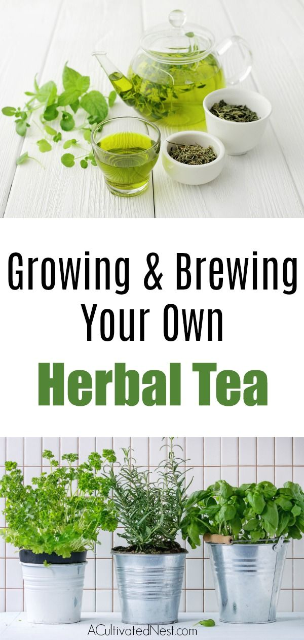 How to Grow Your Own Herbal Tea Garden- 10 Herbs To Get You Started kris jolie