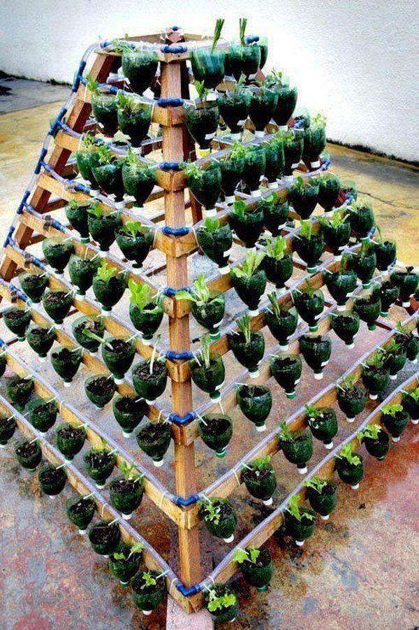 Vertical huerto de botellas de plástico.  Se permite que las plantas se extienden hacia arriba en lugar de crecer a lo largo de la superficie del jardín.  No se necesita mucho espacio y mirar tan hermoso al mismo tiempo.