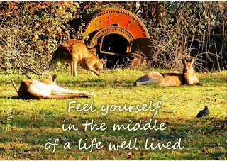 Everyday Guides: In the middle of a life well lived.
