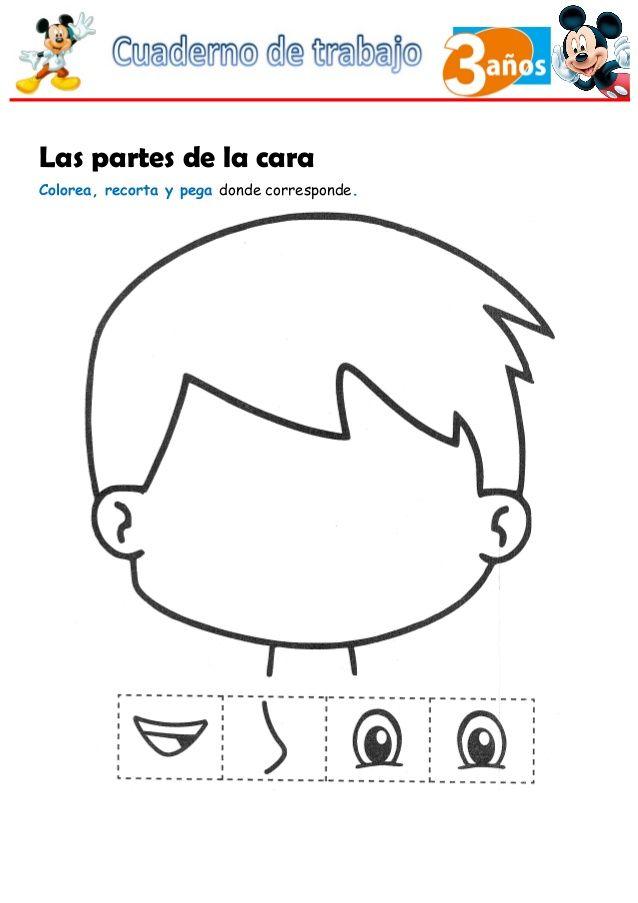 Resultado de imagen para partes de la cara para colorear   Normas