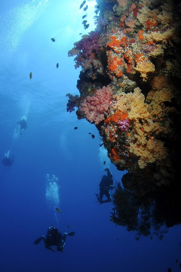 Diving in Fiji, South Pacific