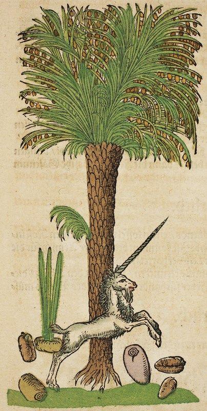 Hieronymus Bock (1498-1554) German botanist. His 1546 herbal had 550 woodcuts by David Kandel. Date Palm with Unicorn.