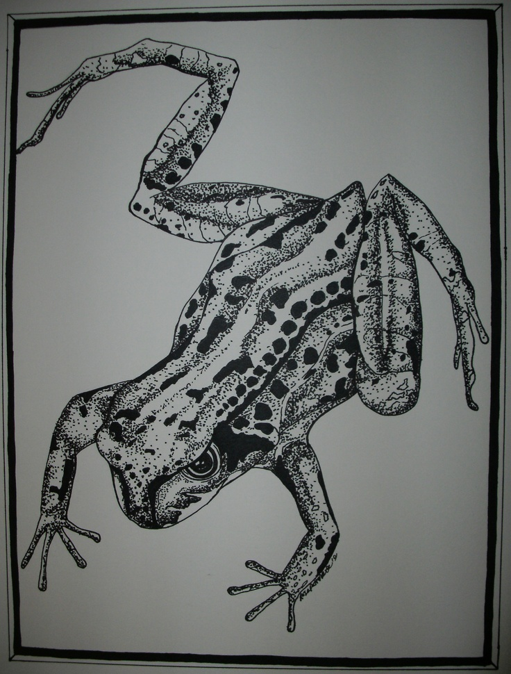 Realistic Tree Frog Drawings 1000+ images about Ton...