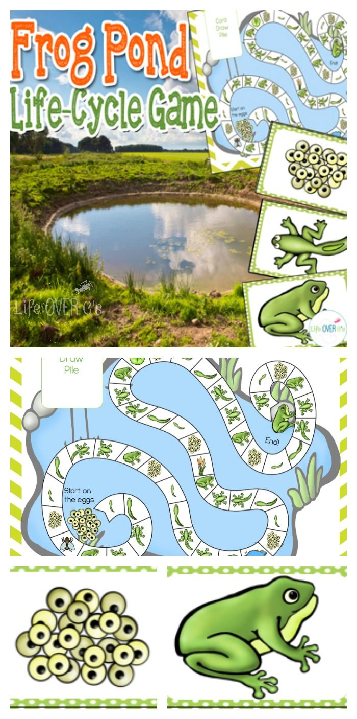 Learn the frog life cycle through a fun Candyland®-style game. File folder and life-size versions included. $