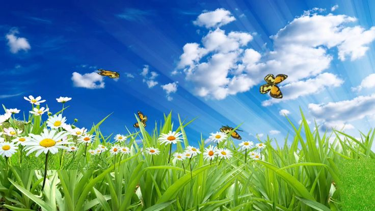 Футаж Бабочки на лугу (Сделать музыкальное слайд-шоу) Друзья! Для вашего творчества. Видеофон бабочки на лугу.  Скачивайте! Применяйте!