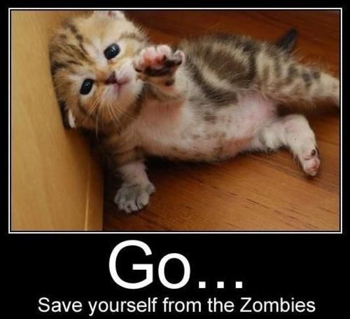 i couldnt let the #zombies get this #cute little #kitten #funny stuff
