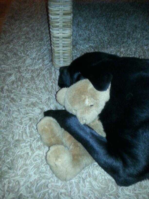 labrador sleeping