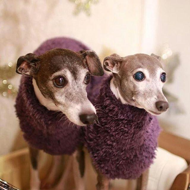 @akairo10 るるママさんから頂いた#動物愛護法の改正を求めるバトン です。 ・ 来年は5年に1度の『動物愛護管理法』改正予定の年です。 その改正に向けて、浅田美代子さんが署名活動をされていらっしゃいます。 浅田さんの要望項目は… ・ ①犬猫の繁殖業について免許制の導入を ②虐待、不適切飼育について動物保護制度を ③日本版アニマルポリスの導入を ④緊急災害時のペット同伴避難を ・ です。 @yu5.maki さん、@purichiyoko さん、@puyomiyu3713 さんのインスタプロフィール欄に貼ってありますリンク先からネット署名が出来ます。 ⚠署名は『ネット署名』または『署名用紙』のどちらか一方のみで、重複しないようご注意下さいませ ・ ・ また、NPO法人JAVAの署名活動もあります。 浅田さんと要望項目はほぼ同じですが、こちらは『動物実験の代替・削減』『畜産動物の福祉』も盛り込まれています。 ・ 『JAVA動物愛護管理法改正』で検索し、HPをご覧下さいませ。(こちらは請願署名の為、ネット署名はありません) ・…