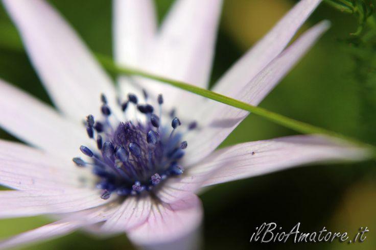 macrofotografia stami, fiore