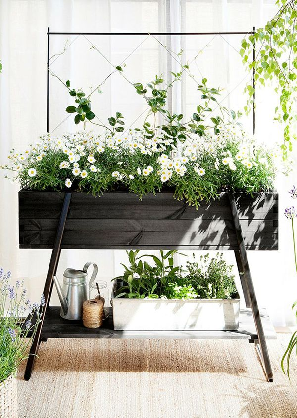 Recipe: Daisies in black wooden raised planter. From the garden pot club board