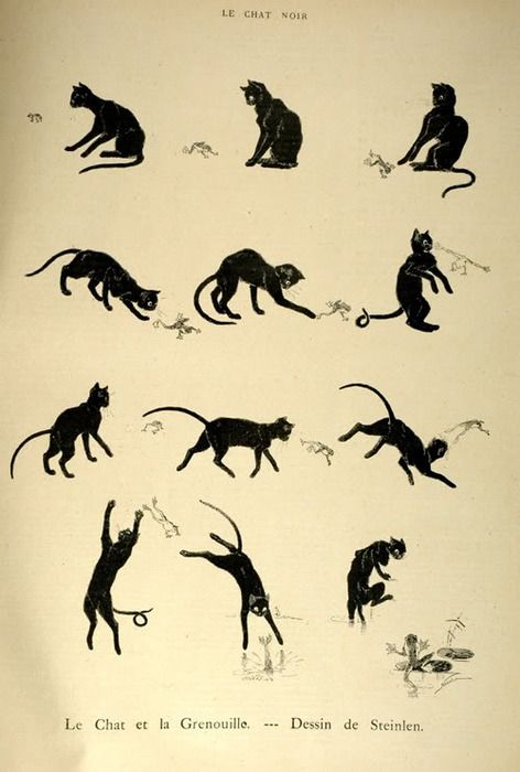 Love this poster. Reminds me of a particular black cat that lives in our house. Except without the frog.