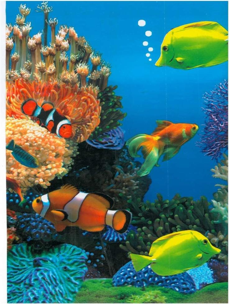 Tropische vissen/koraal fotoprint