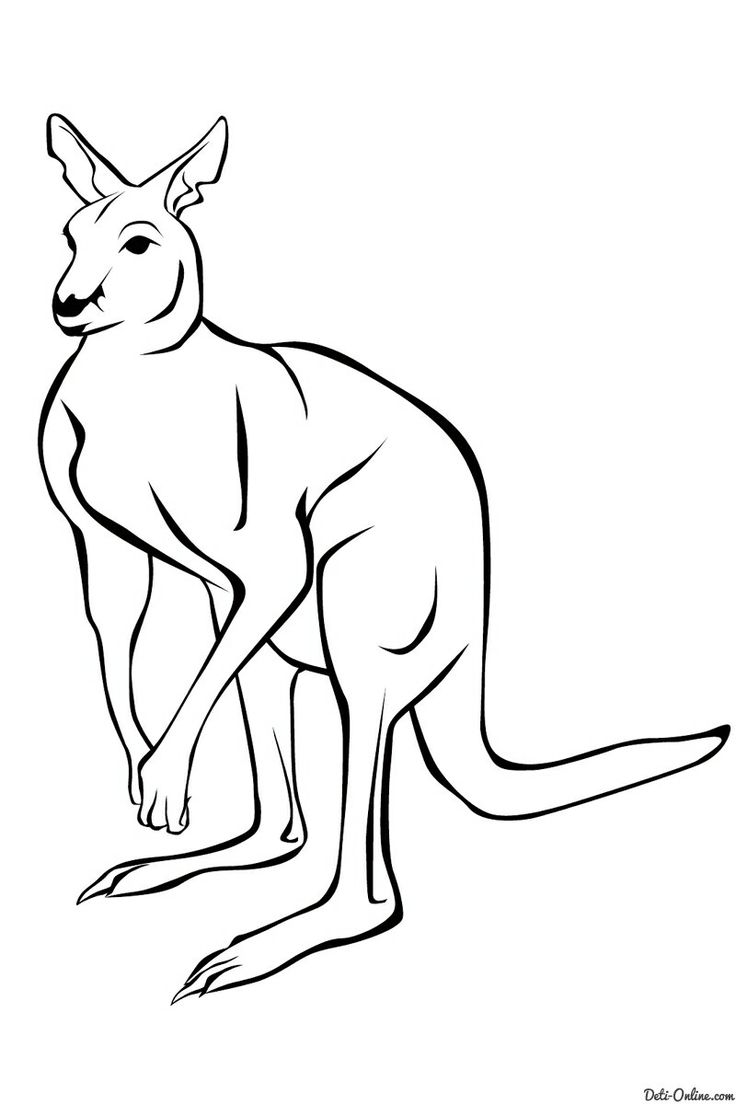 23 best animals images on pinterest animals coloring books and