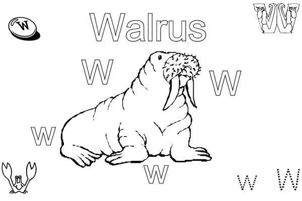 Preschool Learn Letter W For Walrus Coloring Page : Bulk ...