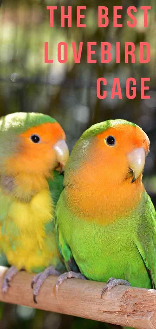 Best Lovebird Cage Options Happy Homes For Birds Best Pet