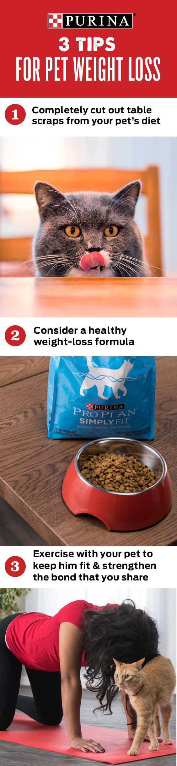 Is my cat overweight? My cat is overweight, what do I do? Find the answers to these questions & more by clicking through to Purina's article on how to know if your cat is overweight & how to help your cat lose weight. By conducting a quick body score check, re-assessing her diet & mixing up her physical activity, you can make strides in your cat's weight loss journey. A healthy life starts with a healthy weight. Learn more about helping your pet start living her best possible life at…