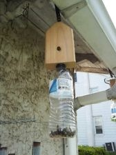 2 Carpenter Bee Trap Borer Traps Safe Effective