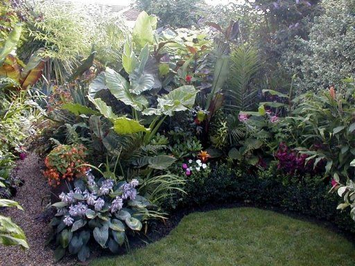 17 best jardin tropical images on pinterest tropical for Jardin tropical plantas