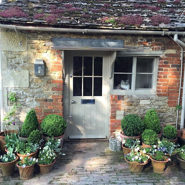 Summer pots done and Nim on guard #thehatchwilts #countryhouses #countrygarden #countrylife #englishcountryhouse