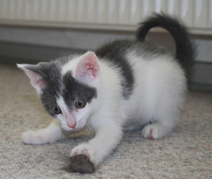 Silke , 7½ weeks old