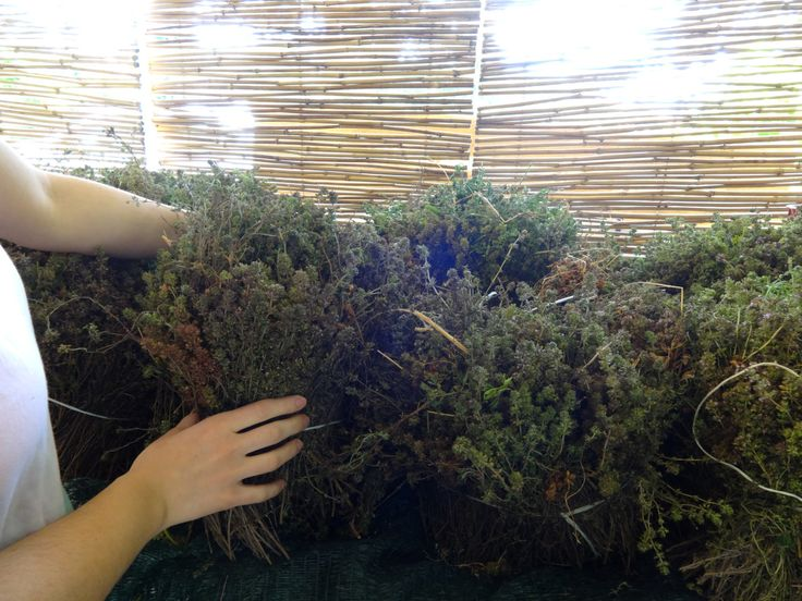 Delivery from our land – our last batch of thyme!