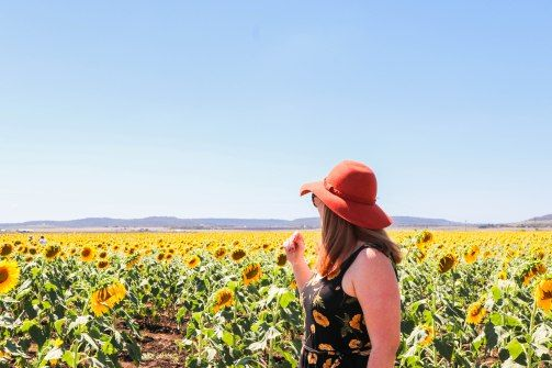 Nobby Queensland Sunflower Trail, Queensland. The most ideal time to go sunflower hunting in South East/West Queensland is December to February - BUT - I would say Feb is just a smidge too late. If you follow the 'gram, you would have seen Jan as peak season for. - The Redhead Novaturient #Nobby #QLD #sunflowers #southwestqueensland