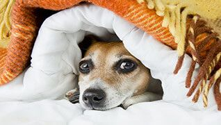 Here are some tips to help your dog cope with their fear of thunder.