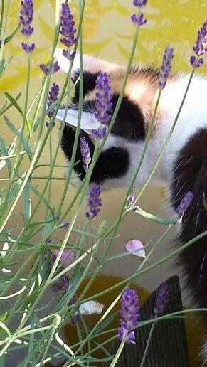 Laika starend na de goudvissen in de vijver.