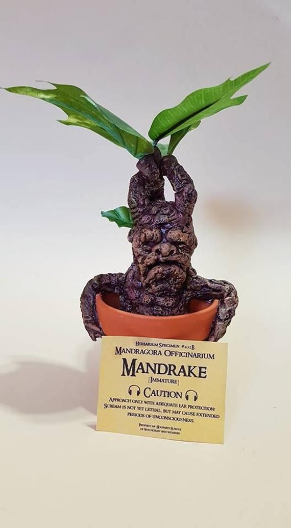 Mandrake Inspired By Harry Potter Harry Potter Mandrake Harry Potter Plants Harry Potter Etsy