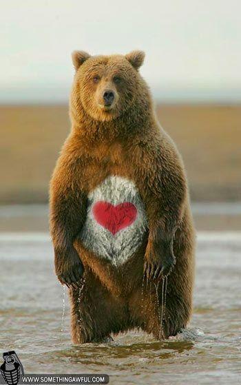 89 best teddy bear love images on pinterest teddybear teddy a real care bear voltagebd Images