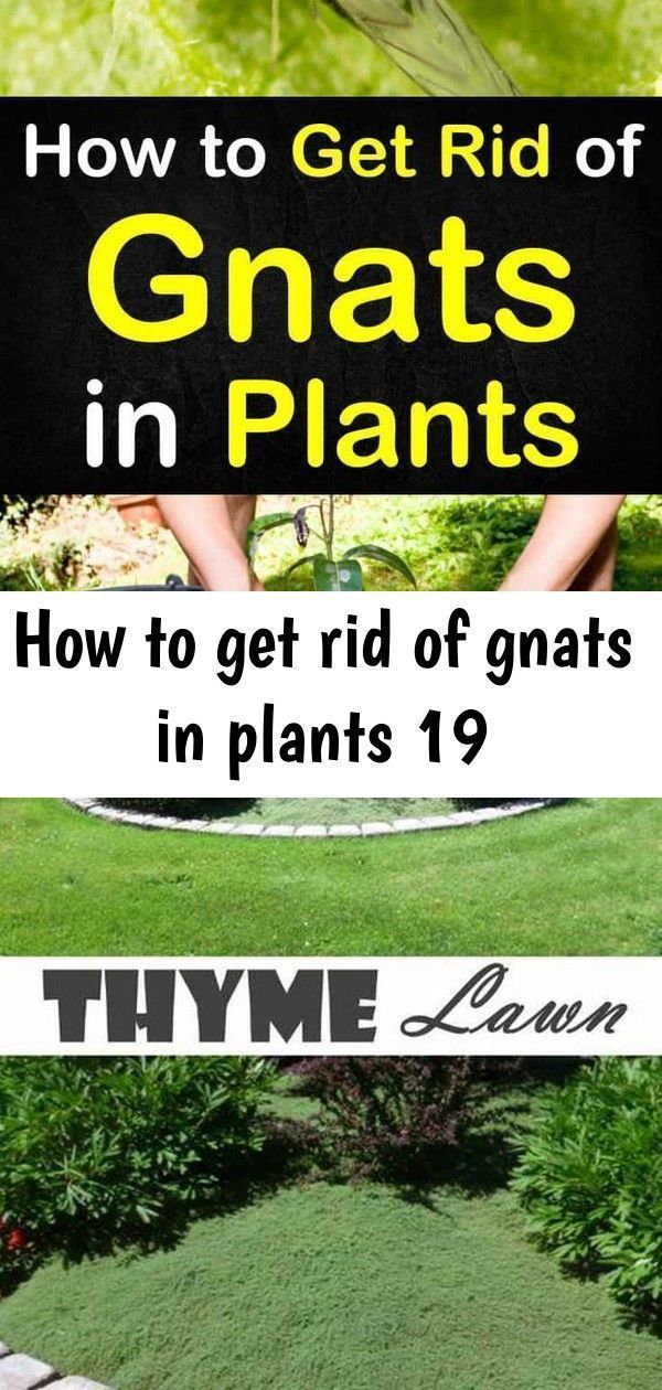 Lots Of Gnats In Backyard - BACKYARD HOME