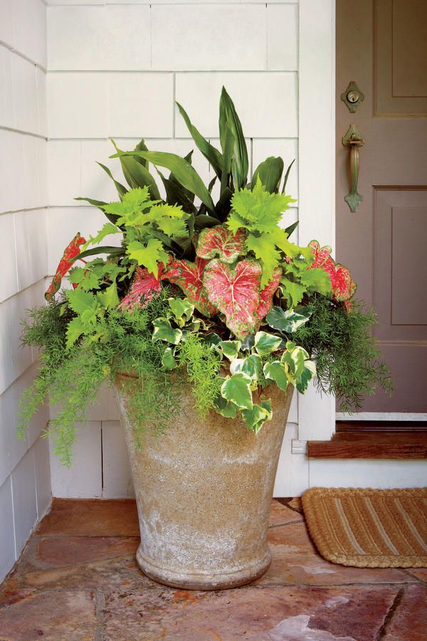 Evergreen Style - Heat-Tolerant Container Gardens for Sweltering Summers - Southernliving. Evergreens are good heat-tolerant addition to a summer container garden. Here, we used a base of evergreens and incorporated caladiums, impatiens, and a creeping fig. SunPatiens do especially well in punishing summer conditions.