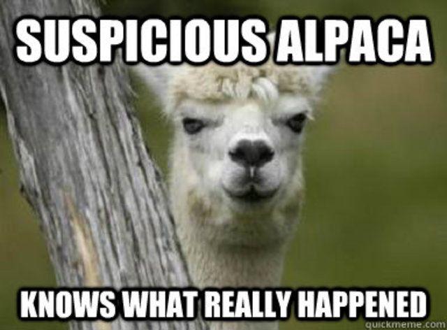 Suspicious Alpaca isn't suspicious about http://www.alpacablankets.com/