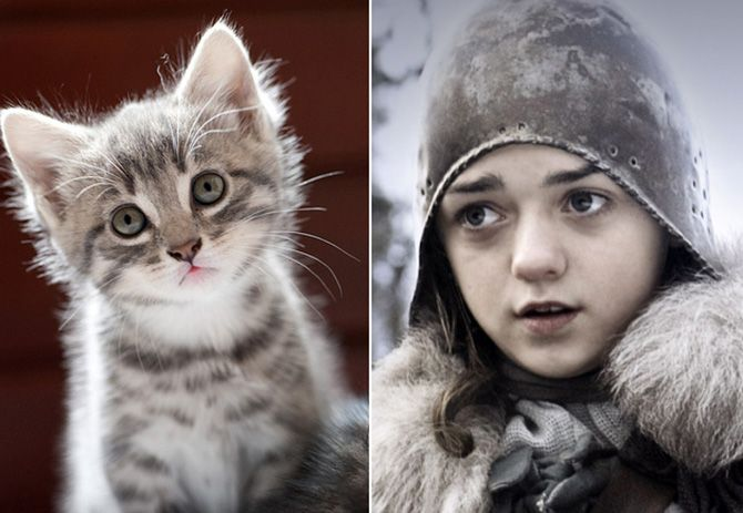 Personagens de Game of Thrones se fossem gatos