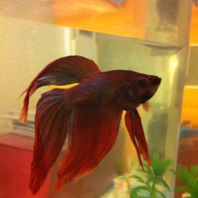 11 best images about pet fishes on pinterest bottle for Best fish to have as pets