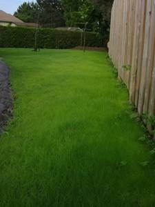 ... Garden Ideas To Replace Grass