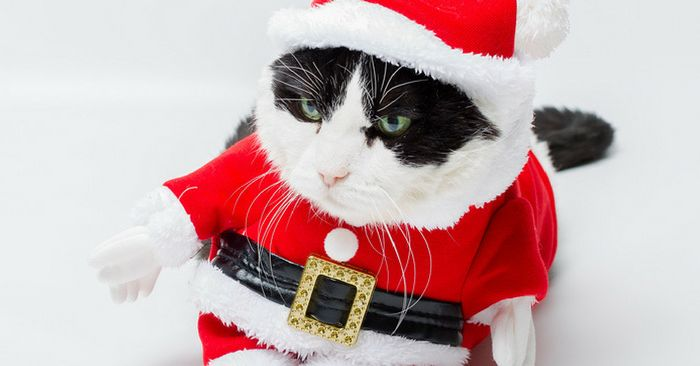 Find your perfect cat Christmas outfit on this list of holiday inspired Christmas cat costumes so you can include your cat in the family photos this year.