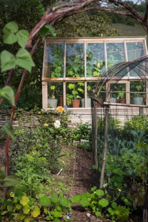 hazel arches + netting - a pretty way to protect soft fruit