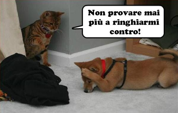 #cats end #dogs