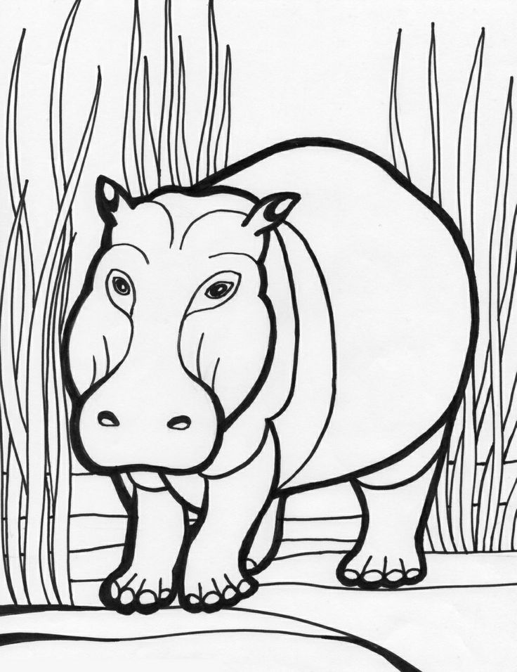 Hippo Free Coloring PagesColoring BooksColouringThe Giving TreeKids