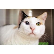 Holly | Seattle Humane Society | Bellevue, Washington | Pets.Overstock.com