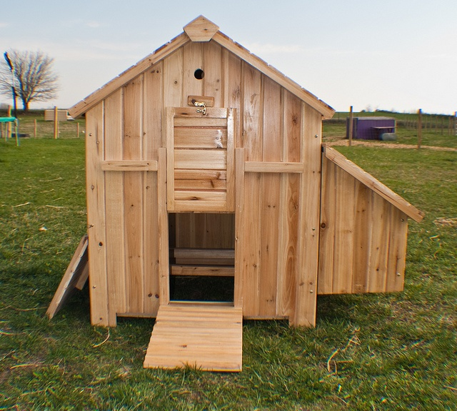 Chicken House Plans 47 best chicken coop images on pinterest | backyard chickens